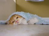 Yogi under the bath rug