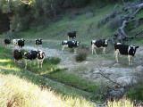 1San Ysidro Creek.jpg