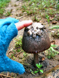 1shroom.jpg