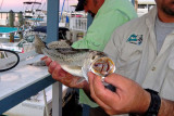 Marco Island Fish.jpg