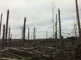 Tornado Damage near Sturbridge, MA