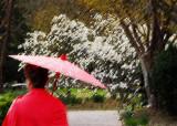 Bonsai and Blossoms