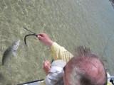 OK, Bill lands a Mangrove-Bonefish! 3081.jpg