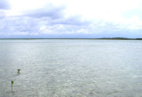 See those 2 mangroves there? This is easy. 3097.jpg