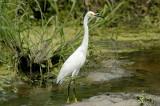 Crane Outer Banks NC