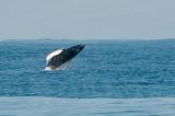 Whale #2