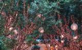 Pixie lights at the Wynn