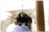 0612 145 Dubrovnik - Baa Baa Black Sheep.jpg