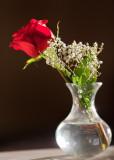 Leah's Rose