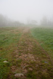 Foggy Day on Blue Hill Mountain #6
