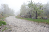 Trees, Rocks and Road in Fog