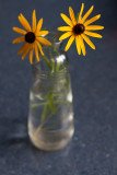 Yellow Daisies on a Blue Counter