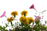 Potted Flowers Against Bight Gray Sky