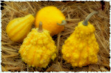 Gourds on a Hay Bale