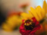 Wildflower Bouquet Closeup #3