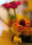 Wildflower Bouquet Closeup #4