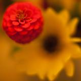 Wildflower Bouquet Closeup #5