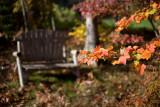 Autumn Bench 2011 #1