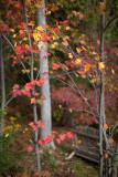 Autumn Bench 2011 #3