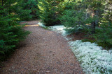 Reindeer Moss-lined Path