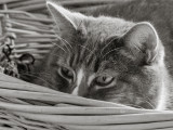 Jenni Peeking Out of Her Basket