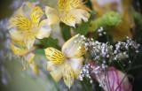Alstromeria in Bouquet
