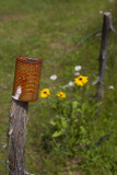 Fencepost Can and Flowers