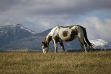 3 Brand Pony