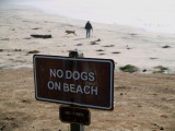 Occupy The Beach