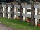 The Cemetery Fence