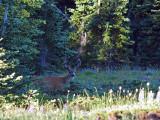 Velvet in the Woods