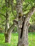 Men det verkade som om något var på gång för att rädda odlingen alla träd hade en siffra.