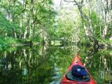 Djungel paddling
