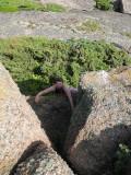 Sara klättrar på Galten