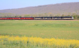The Blue Ribbon Special heads North up the valley on a Spring morning