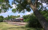 The photographer is enjoyng a litle shade on a HOT day as CofG 8101 leads a Southbound grain train at Burgin Kentucky
