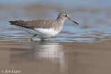 Green Sandpiper / Witgat