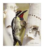 pic_bois__woodpecker