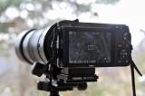 Nikon J1 with Nikon 300mm f/4 (via FT-1 adapter) #3