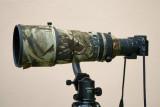 Nikon V1 with Nikon 300mm f/2.8 VR II + TC20-E III (via FT-1 adapter)  #1