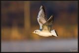 Vols et amerrissages