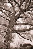 winterholiday-21.jpg