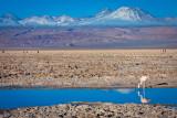 Atacama-193.jpg