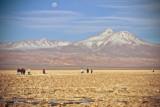 Atacama-170.jpg