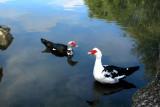 Birds And Wild Life