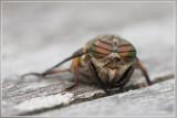 Zweefvliegen en vliegen