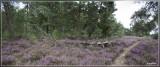 panorama 3360+3361kopie.jpg