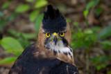 SE Mexico Birding 2012
