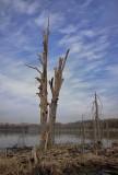 Barren Tree.jpg