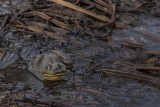 Hey Froggy.jpg